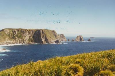 Photograph: Snares Islands looking South East, 4 Nov 1995