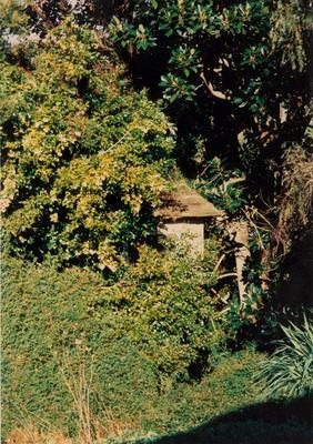 Photograph: Building covered in vegetation