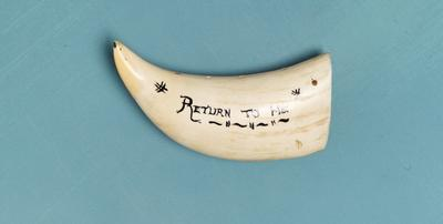 """Sperm whale tooth: inscribed """"Return to Me"""""""