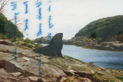 Photograph: Sea lion near Snares hut, from log book of the TOTORORE